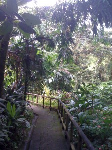 Lost Iguana Resort, Arenal region, Costa Rica